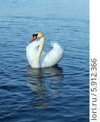 Купить «Лебедь», фото № 5912366, снято 16 января 2008 г. (c) Николай Комаровский / Фотобанк Лори