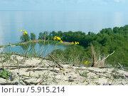 Куршская коса. Растения крупно на фоне пейзажа (2014 год). Редакционное фото, фотограф Svet / Фотобанк Лори