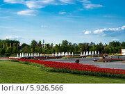 Тюльпаны на Поклонной горе. Стоковое фото, фотограф Зауро Владимир / Фотобанк Лори