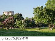 Купить «Москва, Измайлово, Сиреневый сад», фото № 5929410, снято 21 мая 2014 г. (c) Павел Москаленко / Фотобанк Лори