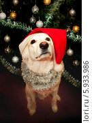 Купить «Дедушка Мороз», фото № 5933986, снято 20 января 2014 г. (c) Киреженкова Марина / Фотобанк Лори