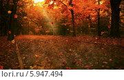 Листопад в парке. Стоковая анимация, видеограф Александр Дейнега / Фотобанк Лори