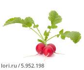 Купить «Редис с листьями», фото № 5952198, снято 17 апреля 2012 г. (c) Natalja Stotika / Фотобанк Лори