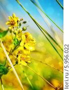 Желтые цветы. Стоковое фото, фотограф Darkbird77 / Фотобанк Лори
