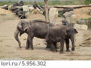Купить «Слоны в пражском зоопарке», фото № 5956302, снято 12 апреля 2014 г. (c) Хименков Николай / Фотобанк Лори