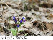 Лесной цветок. Стоковое фото, фотограф Владимир Кориков / Фотобанк Лори