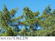 Купить «Лиственница», эксклюзивное фото № 5962278, снято 31 мая 2014 г. (c) Svet / Фотобанк Лори