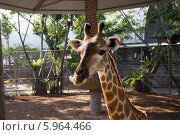 Жираф. Стоковое фото, фотограф Александр Первунин / Фотобанк Лори