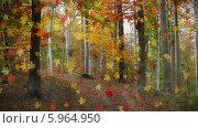 Падающие листья в лесу, коллаж. Стоковая анимация, видеограф Александр Дейнега / Фотобанк Лори
