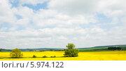Купить «Красивый пейзаж с одинокими деревьями и рапсовыми полями в солнечный весенний день. Чехия», фото № 5974122, снято 27 апреля 2014 г. (c) Екатерина Овсянникова / Фотобанк Лори