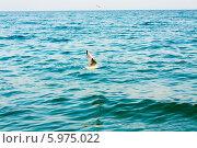 Купить «Чайка летит над морем», фото № 5975022, снято 7 августа 2013 г. (c) g.bruev / Фотобанк Лори