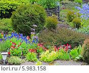 Купить «Первоцветы в саду», эксклюзивное фото № 5983158, снято 7 июня 2014 г. (c) Евгений Мухортов / Фотобанк Лори