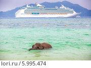 Маленький слоненок плывет на фоне большого корабля. Стоковое фото, фотограф Евгений Воробьев / Фотобанк Лори