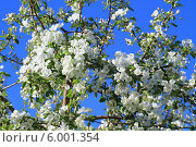 Купить «Весна и небо», фото № 6001354, снято 29 мая 2013 г. (c) Анатолий Матвейчук / Фотобанк Лори
