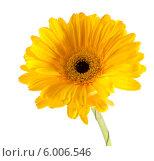 Купить «Желтая гербера на белом фоне», фото № 6006546, снято 9 июня 2013 г. (c) Литвяк Игорь / Фотобанк Лори