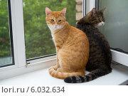 Две кошки сидят на подоконнике. Стоковое фото, фотограф Okssi / Фотобанк Лори