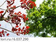 Ветки деревьев с красными и зелёными листьями. Стоковое фото, фотограф Анастасия Филиппова / Фотобанк Лори