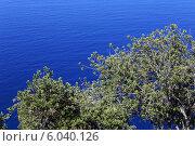 Купить «Дерево на фоне моря», фото № 6040126, снято 13 августа 2013 г. (c) Nikolaj Kondratenko / Фотобанк Лори