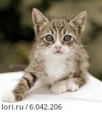 Полосатый котенок на открытом воздухе. Стоковое фото, фотограф Елена Ларина / Фотобанк Лори