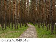 Сосновый бор. Стоковое фото, фотограф Aleksandr Tishkov / Фотобанк Лори