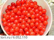 Купить «Ягоды китайской войлочной вишни, собранные в посуду», фото № 6052110, снято 22 июня 2014 г. (c) Игорь Кутателадзе / Фотобанк Лори