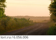 Подсолнухи. Стоковое фото, фотограф Наталья Есипова / Фотобанк Лори