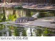 Крокодиловая ферма (2013 год). Стоковое фото, фотограф Александр Первунин / Фотобанк Лори