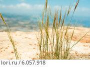 Трава с видом на море. Стоковое фото, фотограф Дарья Мирошникова / Фотобанк Лори
