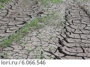 Купить «Высохшая земля с пробивающимися растениями. Засуха», эксклюзивное фото № 6066546, снято 30 июня 2014 г. (c) Евгений Мухортов / Фотобанк Лори