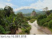 Купить «Джунгли на острове Суматра, Индонезия», фото № 6081818, снято 24 декабря 2013 г. (c) Elena Odareeva / Фотобанк Лори