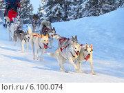 Купить «Ездовые собаки», фото № 6100074, снято 20 января 2013 г. (c) yeti / Фотобанк Лори