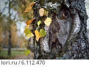Лицо березы. Стоковое фото, фотограф Игорь Аксеновский / Фотобанк Лори