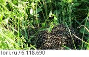 Купить «Еж в траве», видеоролик № 6118690, снято 2 июля 2014 г. (c) Михаил Коханчиков / Фотобанк Лори