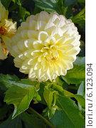 Купить «Солнечный цветок (лат. Dаhlia)», эксклюзивное фото № 6123094, снято 1 июня 2020 г. (c) Svet / Фотобанк Лори
