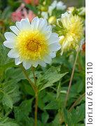 Купить «Солнечный цветок (лат. Dаhlia)», эксклюзивное фото № 6123110, снято 7 июля 2020 г. (c) Svet / Фотобанк Лори
