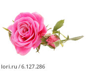 Купить «Pink rose flower head isolated on white background cutout», фото № 6127286, снято 21 июня 2013 г. (c) Natalja Stotika / Фотобанк Лори