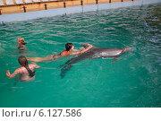 Купить «Купание с дельфинами», эксклюзивное фото № 6127586, снято 31 июля 2012 г. (c) Алёшина Оксана / Фотобанк Лори