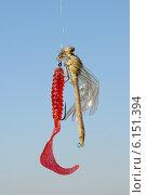 Купить «Стрекоза, сидящая на рыболовной силиконовой насадке твистер», фото № 6151394, снято 15 июля 2014 г. (c) Андрей Забродин / Фотобанк Лори