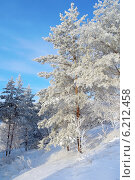 Красивый зимний пейзаж с соснами. Стоковое фото, фотограф Сергей Девяткин / Фотобанк Лори