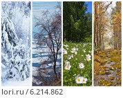 Времена года. Природа. Четыре сезона. Коллаж. Стоковое фото, фотограф Виктория Катьянова / Фотобанк Лори