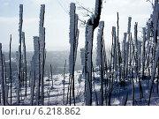 Зимний день. Стоковое фото, фотограф Венера Бенько / Фотобанк Лори