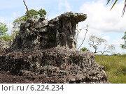 Купить «Выходы докембрийских горных пород. Колумбия», фото № 6224234, снято 10 ноября 2012 г. (c) Free Wind / Фотобанк Лори