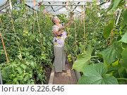 Купить «Пожилая женщина ухаживает за своими помидорами в теплице», фото № 6226646, снято 14 июля 2014 г. (c) Анатолий Труков / Фотобанк Лори