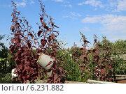 Красная трава. Стоковое фото, фотограф Алена Перфилова / Фотобанк Лори