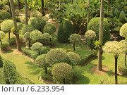 Купить «Таиланд. Тропический сад Нонг Нуч (Nong Nooch)», фото № 6233954, снято 22 февраля 2014 г. (c) Алексей Сварцов / Фотобанк Лори