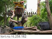 Три бунтуронга сидят на дереве в вольере и кушают. Стоковое фото, фотограф Анна Королева / Фотобанк Лори