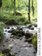 Горная река в парке Мтирала (Грузия) Стоковое фото, фотограф Романова Евгения / Фотобанк Лори