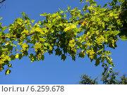 Виноградная лоза, Болгария. Стоковое фото, фотограф Евгений Малахов / Фотобанк Лори
