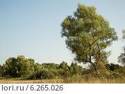 Дерево. Стоковое фото, фотограф Ярослав Грицан / Фотобанк Лори