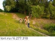 Коров ведут домой. Стоковое фото, фотограф Нина Ефремова / Фотобанк Лори